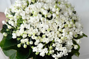 Bianco Bouquet, Wedding Planner a Firenze